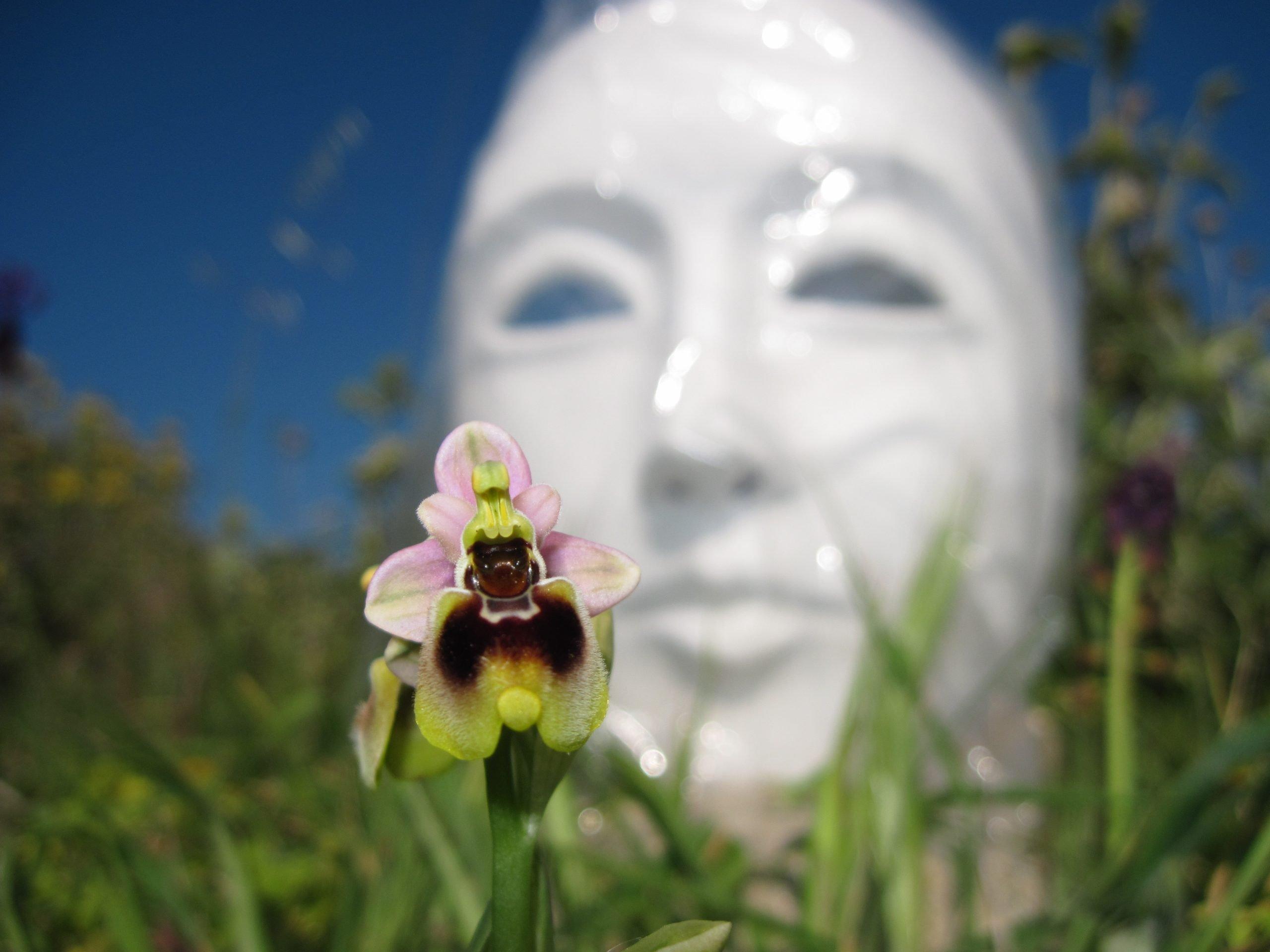 Ophrys-tenthredinifera-salento-kaliani-trip